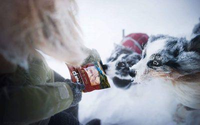 Skitur med hund- råd og tips